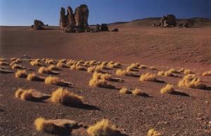 Desert 19