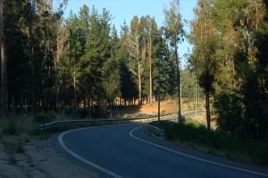 Roads 247